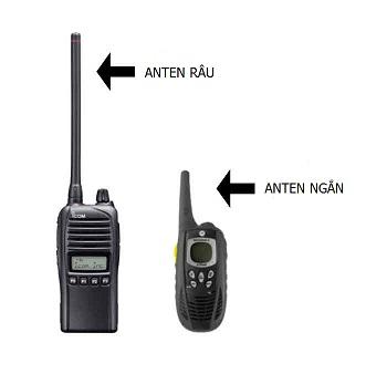 anten râu và anten ngắn